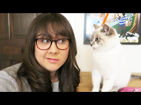 I GOT A CAT? (MEET MILQUETOAST) - MONDAY VLOG