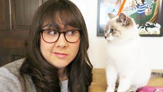 I GOT A CAT? (MEET MILQUETOAST) - MONDAY VLOG