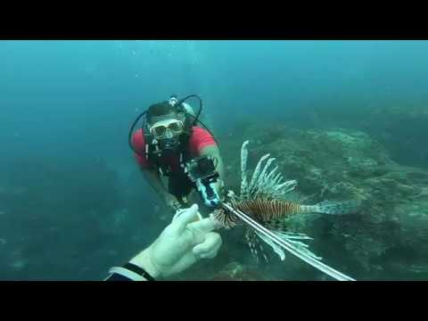 SPEARING LIONFISH IN JAMAICA