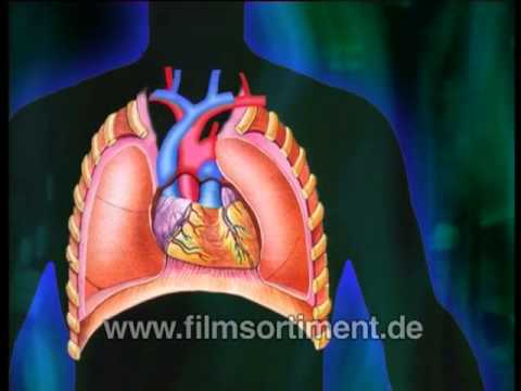 Biologie: KÖRPERSYSTEME (DVD / Vorschau) - YouTube