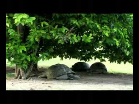 Nature and Wildlife in the Seychelles