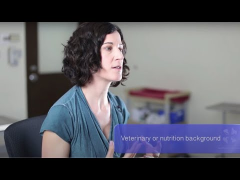 Holistic Vet | Feeding Your Pet a Non-Traditional Diet