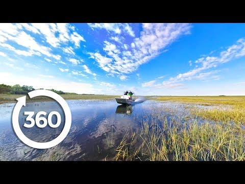 Let's Go Places: Florida | Swamp Things (360 Video)