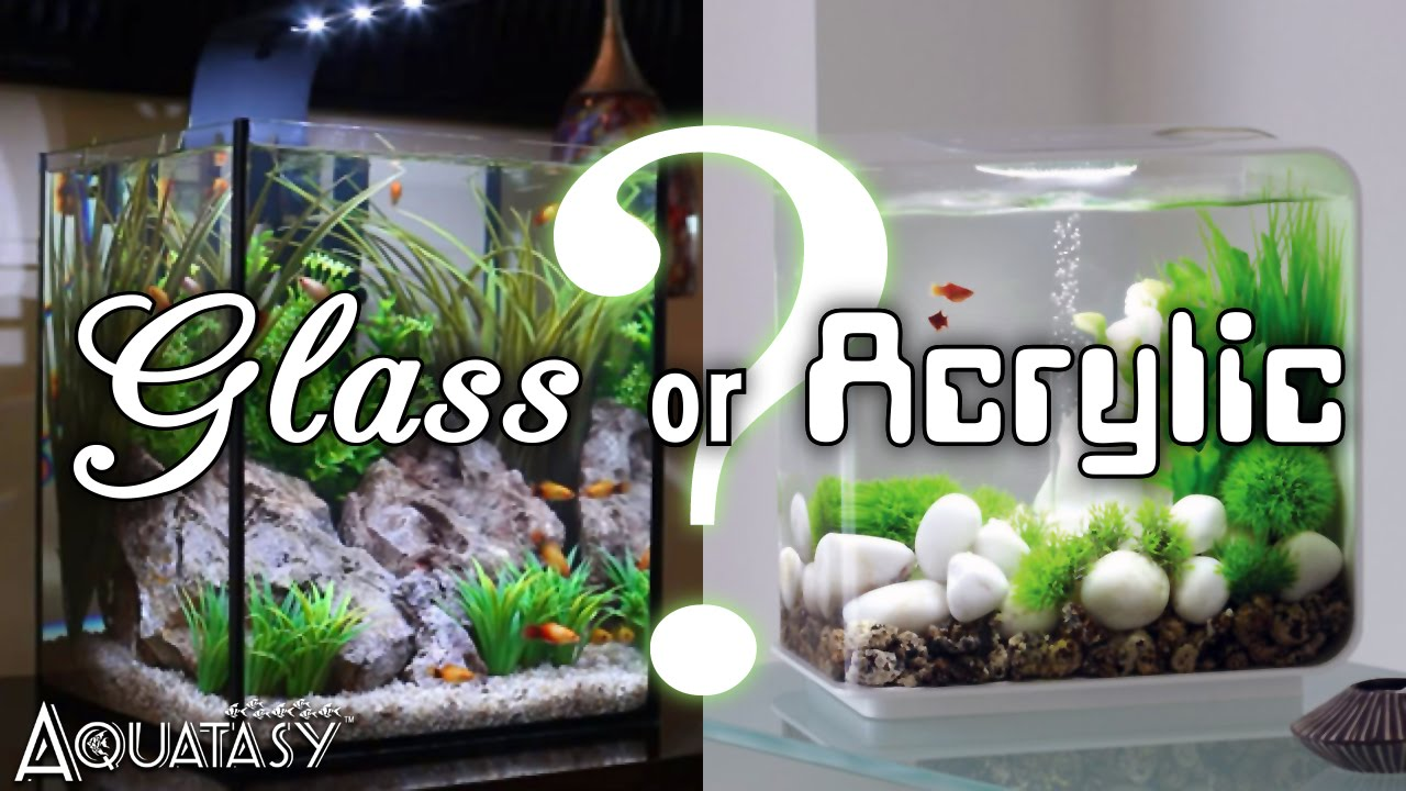 Fish tank vs aquarium - A Guide To Choosing Your Next Aquarium