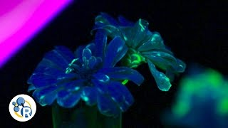 How To Grow Fluorescent Flowers (Chemistry Life Hacks)