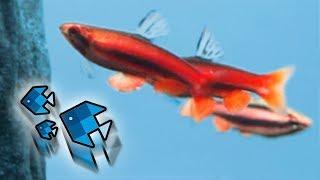 Die neuen Fische kämpfen! 😳