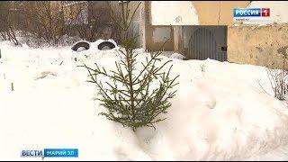 Йошкаролинцы начали избавляться от новогодних елей