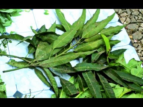 Traditional herbalist claims cure for poor sex drive, memory loss & more (Real-Life Nigerian Movie)