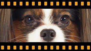 Собачья жизнь 2 / Девять жизней Сени / Сериалити от ЮКИ 21 серия