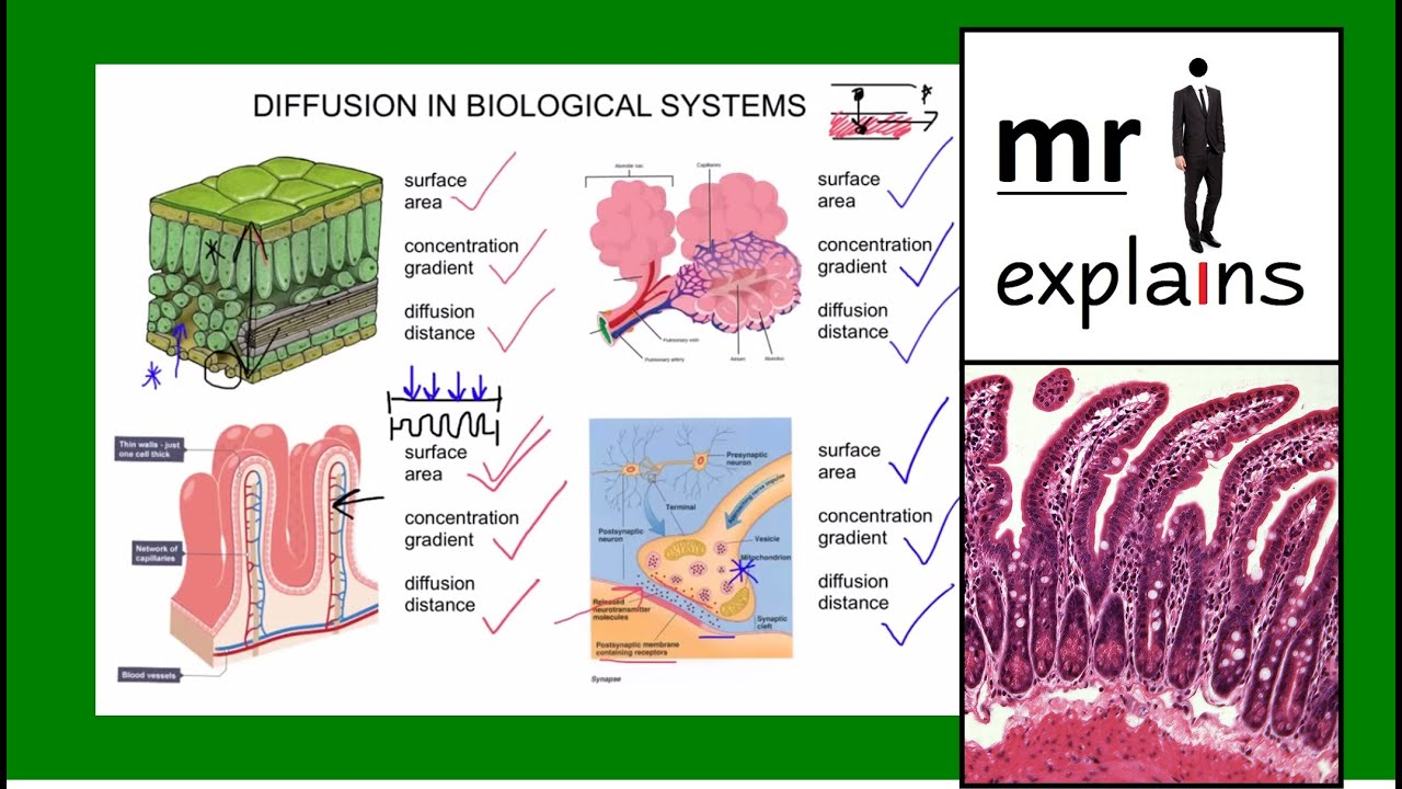 Mr I Explains Diffusion Pt2 Examples Of Diffusion In
