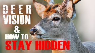 Deer Vision: How it Works and How to Stay Hidden