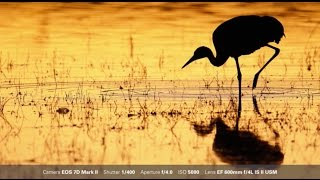 Canon: Bird Photography with Arthur Morris: One Shot and AI Servo AF