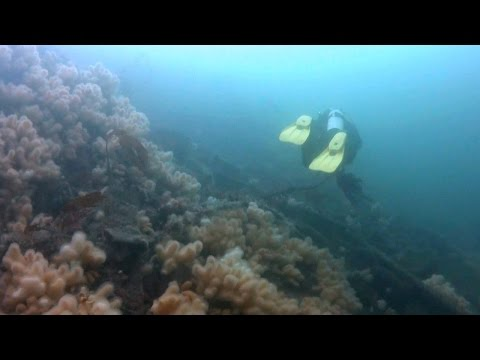 April 2016 Dive Beneath the Kylesku Bridge