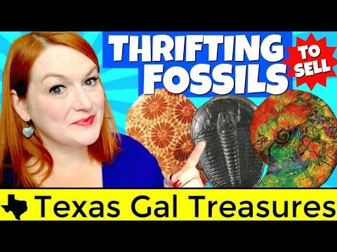 Selling Fossils and Fossil Jewelry - Identifying Ammonite, Trilobite, Crinoid, Coral