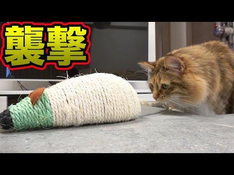 巨大ねずみと因縁の対決!!