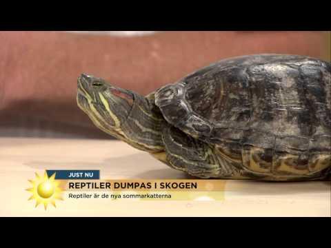 Ormbesöket som satte skräck i studion  - Nyhetsmorgon (TV4)