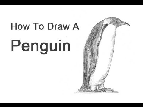 how to draw a penguin emperor