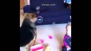 pies babelki i dziecko