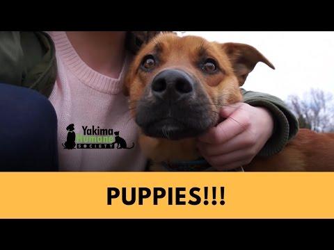 DID WE GET A DOG?? | Yakima Humane Society