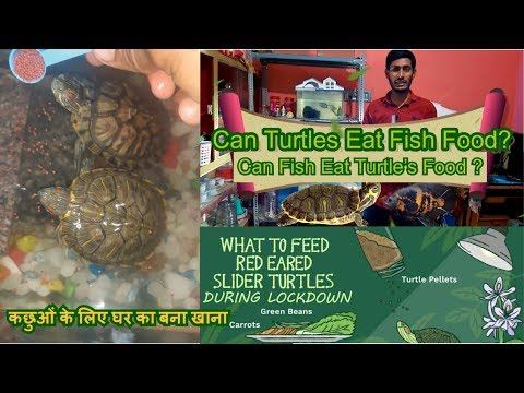 Turtle Eat Fish Food? Homemade Food For Turtles