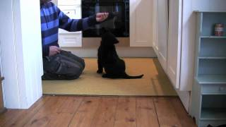★ Puppy Training In London - Bootsy's First Lesson ★