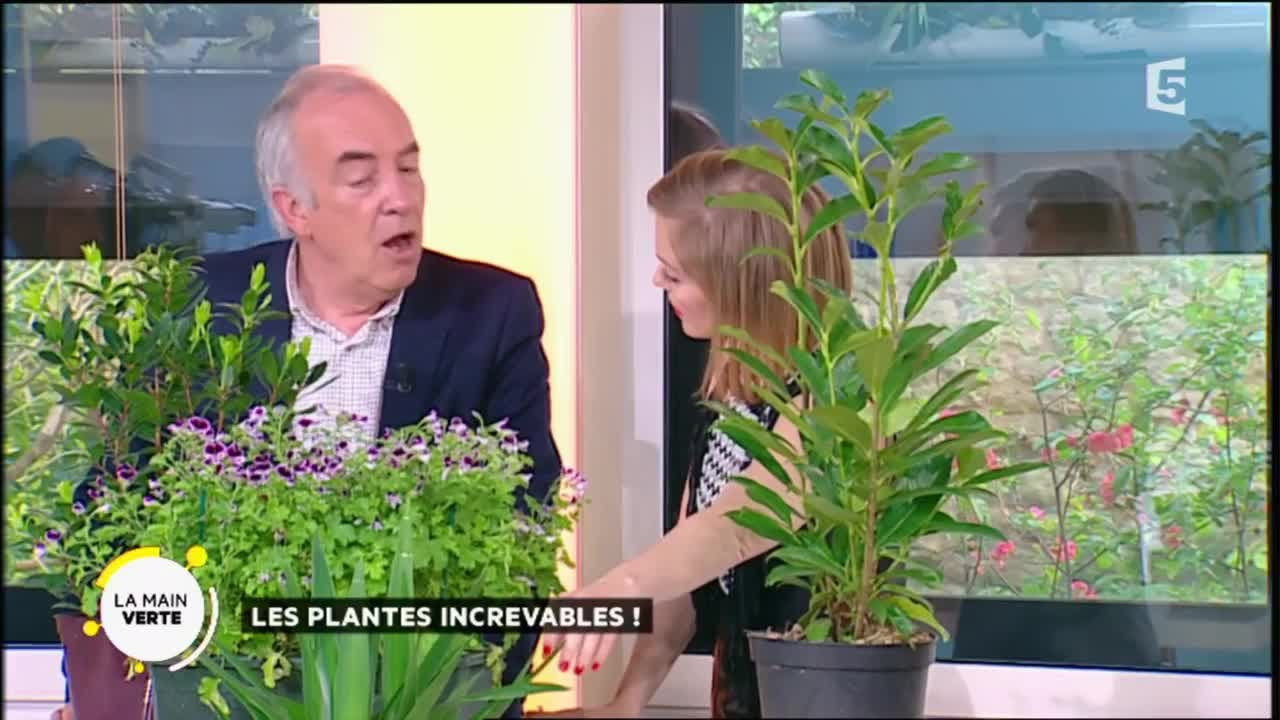 Plantes Increvables Les Plantes Increvables