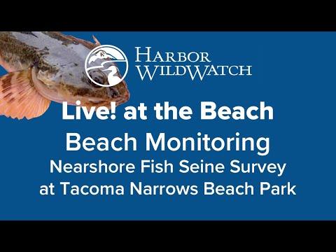 Live At The Beach - Nearshore Fish Seine Survey