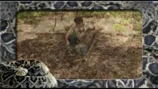 eastern diamondback rattlesnake(crotalus adamanteus)