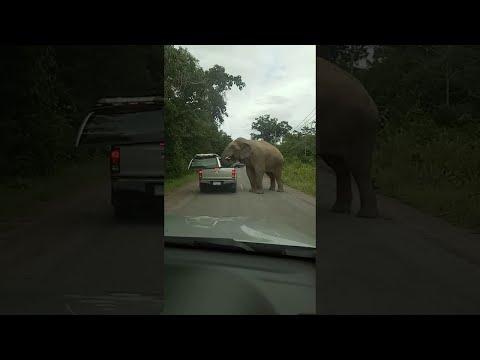 hambriento elefante arranca el techo de un coche en busca de comida