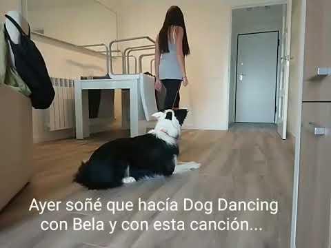 Dog DANCING. The first time freestyle Heelwork To Music Dirty Dancing BELA & Tamara Hernán