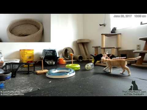 Hurricane Kittens - Battle in the Battle Bed