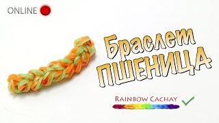 Браслет Пшеница. Прямая трансляция онлайн (online).