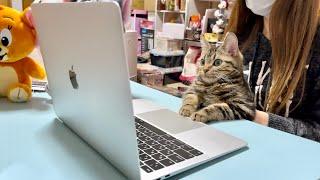 子猫がトムとジェリーのアニメを見るとこうなりますw