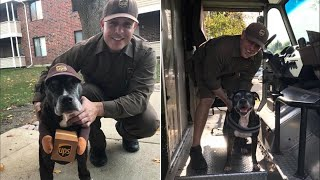 Pit Bull Dresses Up as Her Favorite UPS Deliveryman for Halloween thumbnail
