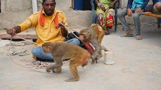 Bandar Bandariya ka khel Short Version || Funny Monkey Dance Video || Monkey Comedy