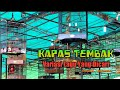 Lomba Burung Kapas Tembak Radjawali Indonesia Award Palembang  Mp3 - Mp4 Download