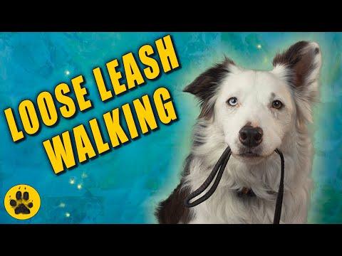 Loose Leash Walking Games (Border Collies)