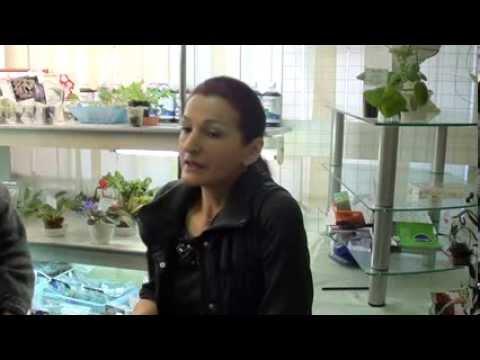 Комнатные фиалки (Сенполия), цветок узамбарская фиалка