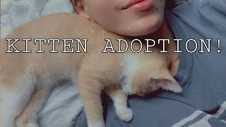 8 Things I Wish I Knew Before Adopting A Kitten during COVID! Cat Mom Life