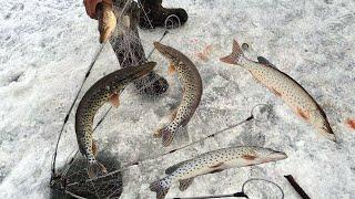 ЛОВ ВЕСЕННЕГО ЩУКАРЯ НА ХАПУГУ ХЛОПОК Весенняя рыбалка 2021