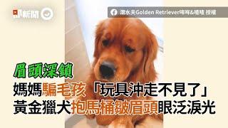 媽媽騙黃金獵犬「玩具被沖走」!牠抱馬桶皺眉頭眼泛淚光|寵物動物|狗|精選影片
