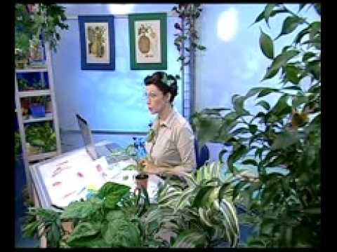 Биология 6. Растение диффенбахия — Академия занимательных наук