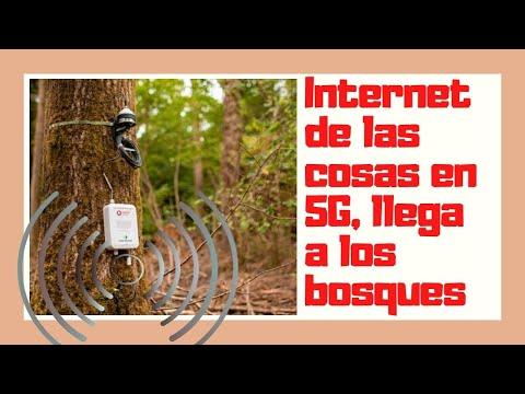 Tecnología invasiva.Bosques con antenas 5G