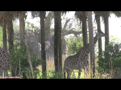 Kilimanjaro Safaris (Full Ride) Disney World's Animal Kingdom