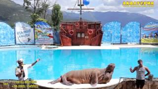 "Театр морских животных ""Акватория"" (Ялта): морж vs человек"