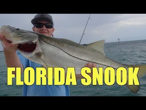 Snook on Live Bait in Stuart Florida