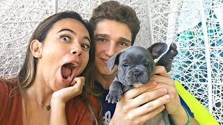 One of Matthew Berry's most viewed videos: MEETING MY GIRLFRIEND'S NEW PUPPY!!!