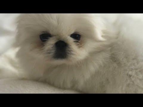 LIVE 🐶 We got a puppy!