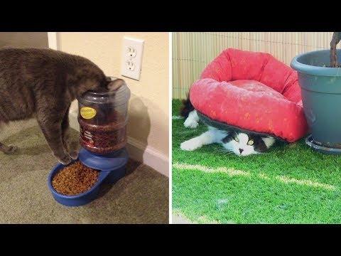 Кошачья логика, которую не дано понять человеку