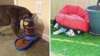 Кошачья логика которую не дано понять человеку